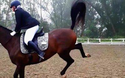 Le cheval a-t'il une douleur ou es ce un souvenir?