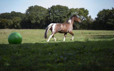 La peur : l'émotion que nous comprenons le moins chez les chevaux.